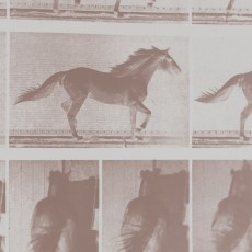 ANALOGIE – Projekt Equivolution, 2016, photograph by Eadweard Muybridge, horse in motion, 1886